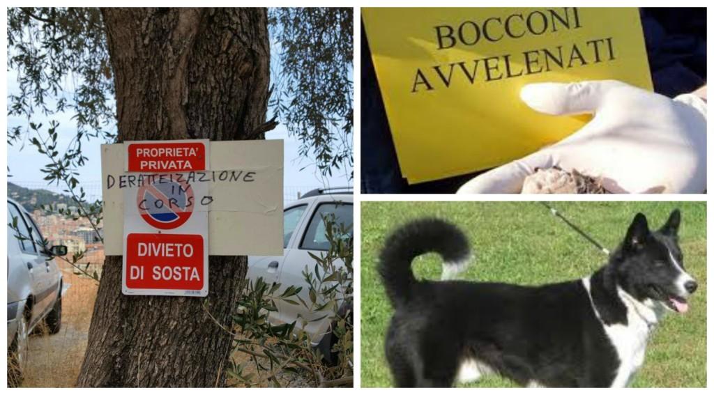 Bocconi avvelenati cani
