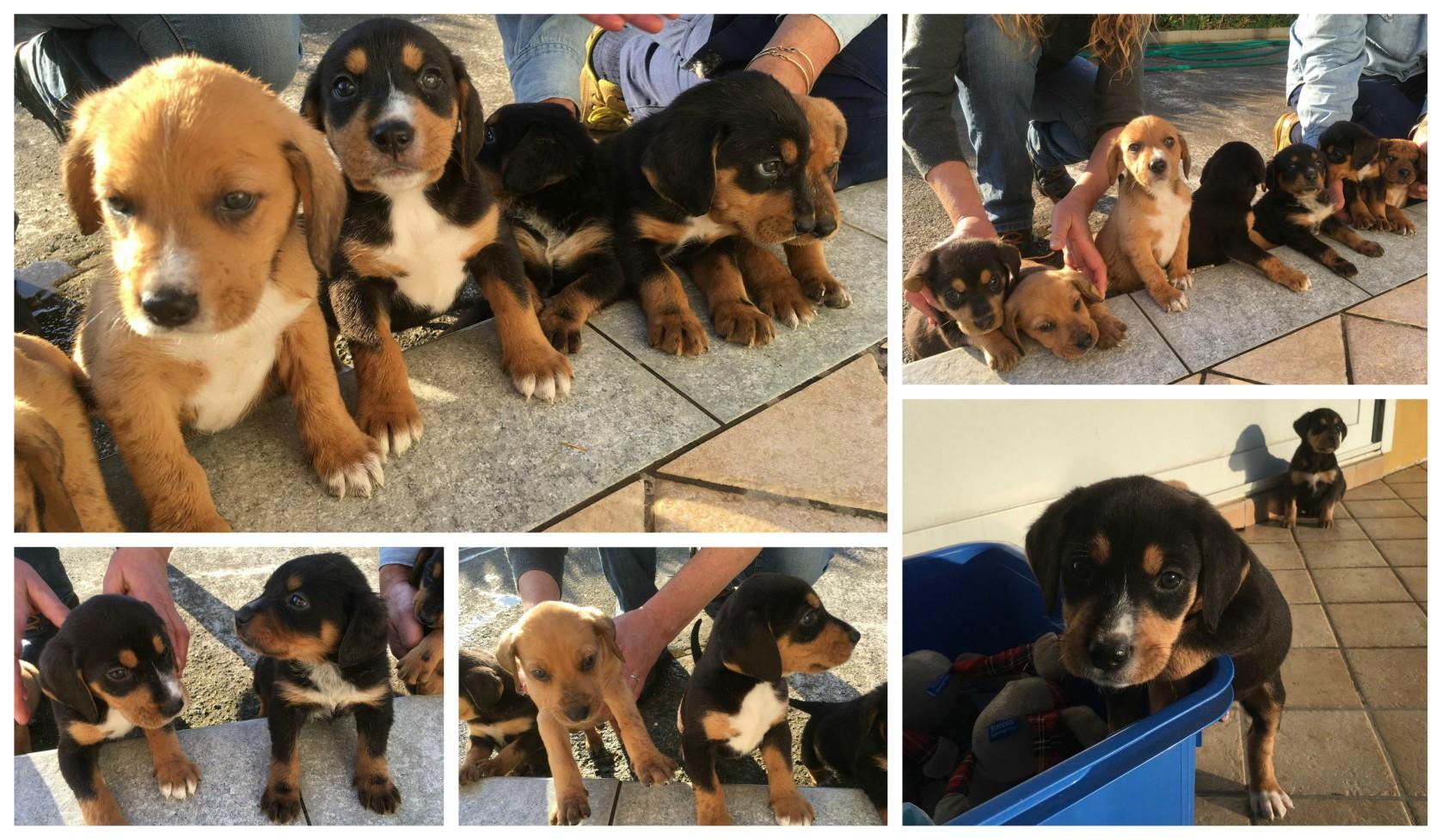 Imperia cinque cuccioli di cane orfani a due giorni for Recinti per cuccioli di cane in casa