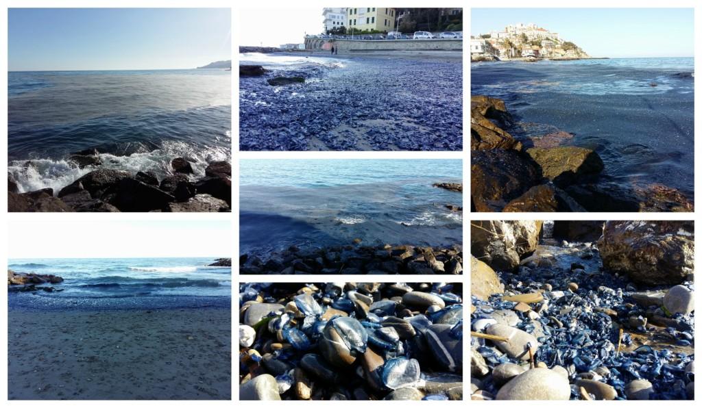 collage_meduse