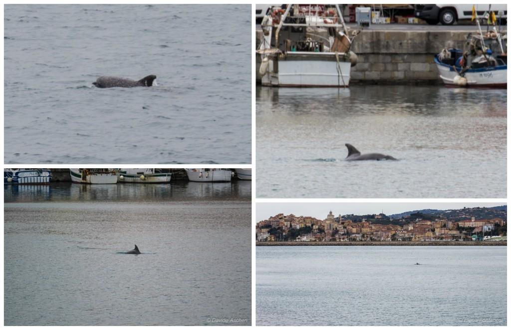 delfino-porto-oneglia-imperia-2