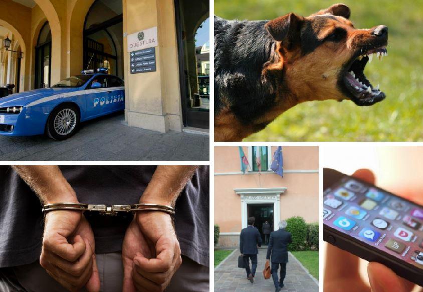 arresto cani