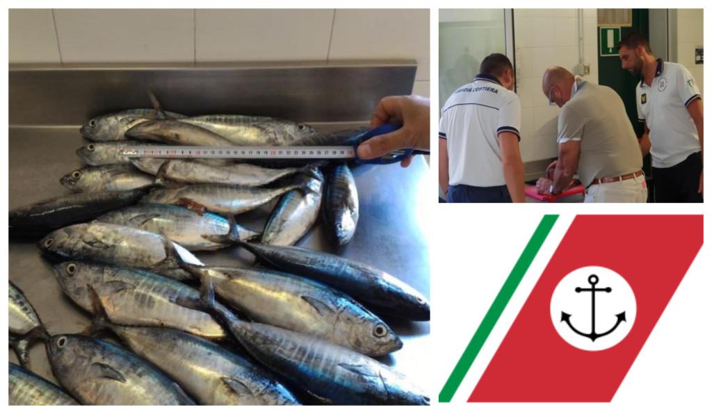 tonno rosso pescato taglia minima sequestro multa guardia costiera imperia