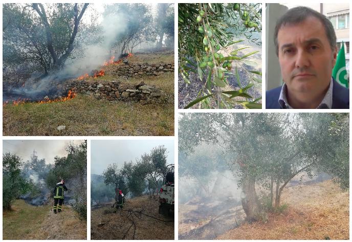 incendio-costa-oneglia-cia-danni-agricoltura