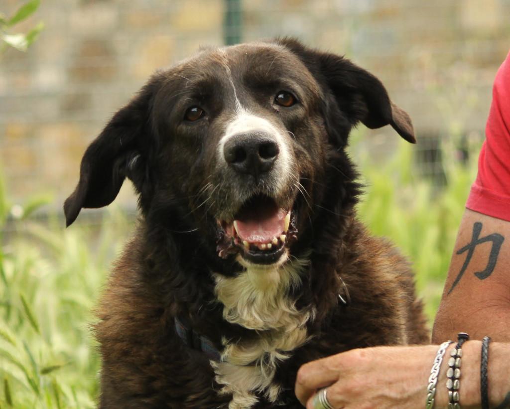 adozione-cane-rifugio-canile-la-cuccia-imperia