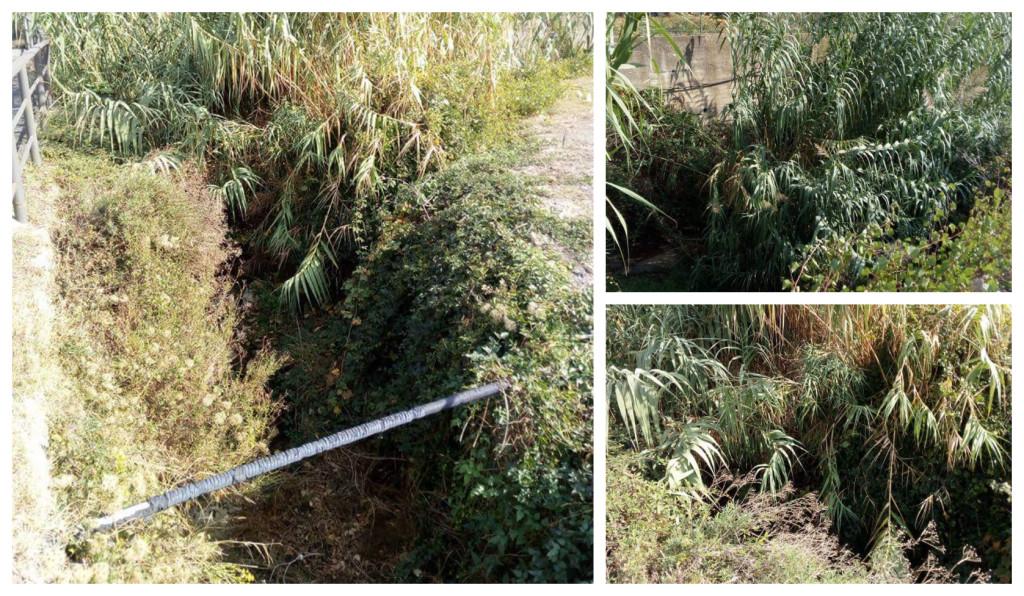 torrente varcavello vegetazione